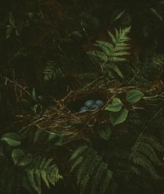Bird's Nest and Ferns (JPEG)